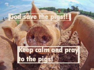 there-will-still-be-plenty-of-pigs-since-they-dont-eat-much-alfalfa